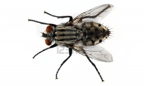 Kills Flies (Even in Horse Barns) in and near Tampa Florida
