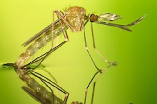 Where Mosquitoes Breed Affects You in and near Palm Harbor Florida