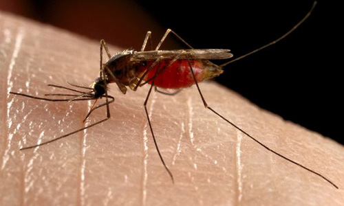 Kills Mosquitoes in and near St Petersburg Florida